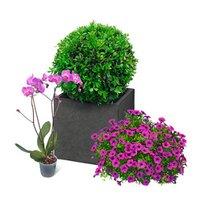 Acquistare E Ordinare Giardino E Tempo Libero Da Obi