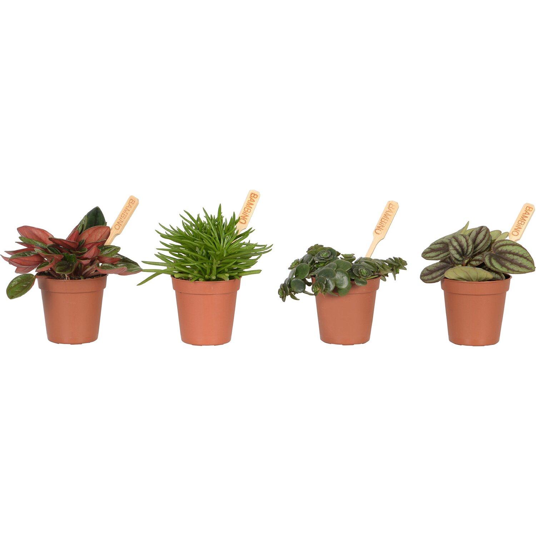 vendita piante grasse mini