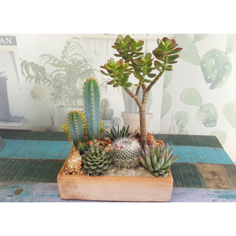 Composizione giardino deserto piccolo acquista da obi - Composizione giardino ...