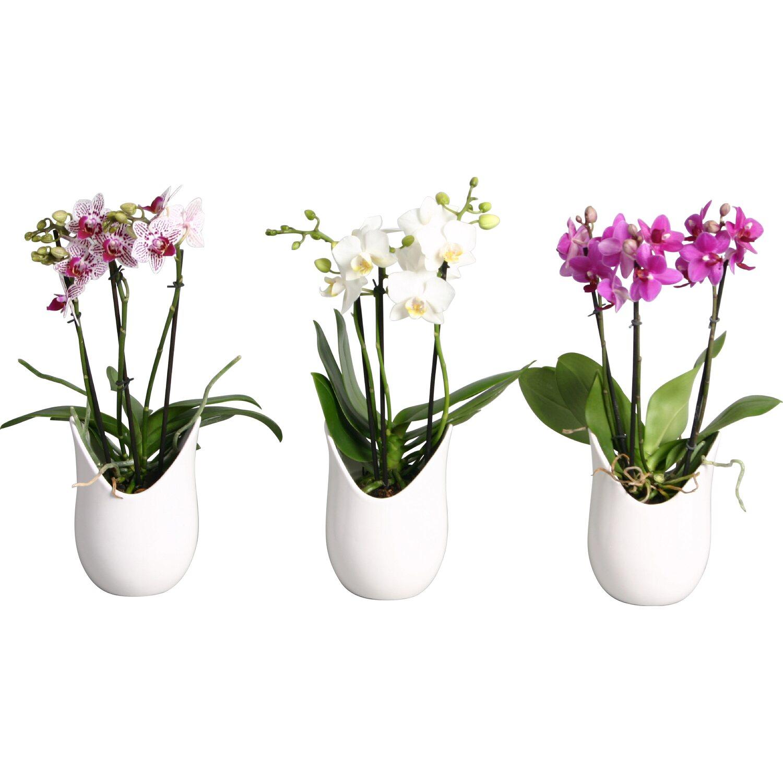 Vasi per orchidee fai da te gallery of view images vasi - Rami decorativi per vasi ...