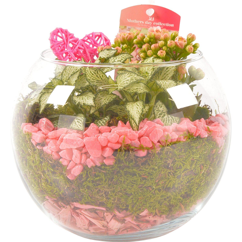 Composizione Vasi Da Balcone composizione regalo 2 piante in vaso di vetro con fiori rosa
