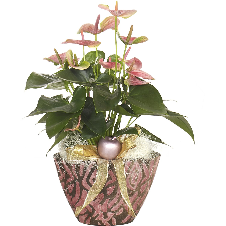 Anthurium Cura Della Pianta composizione anthurium in vaso ovale decorazione safari | obi