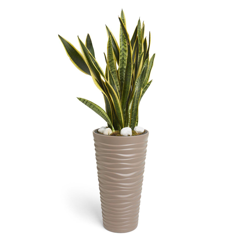 Composizione Vasi Da Balcone composizione zamioculcas zamifoilia in vaso alto h cm 50