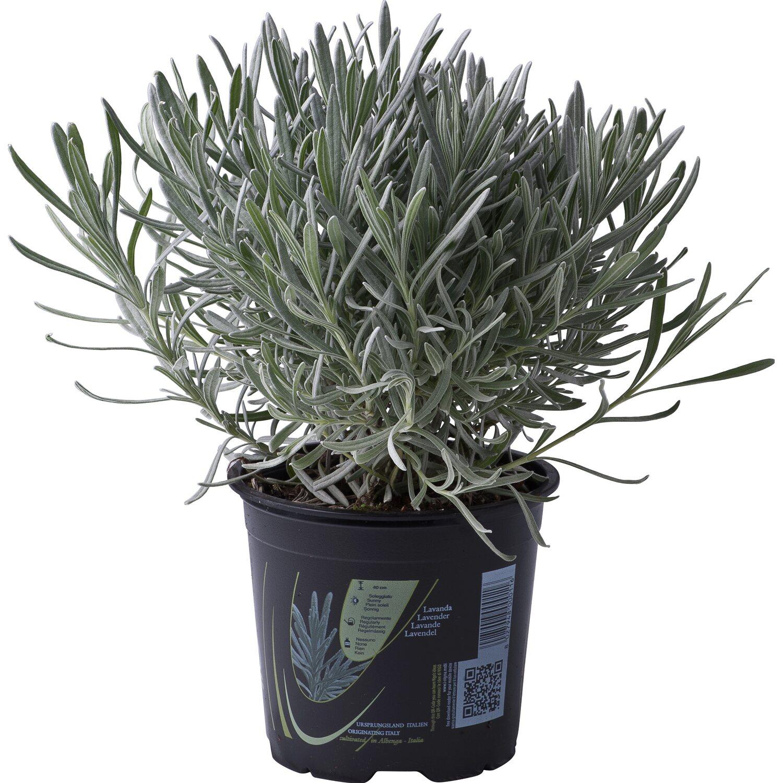 piante a poco prezzo