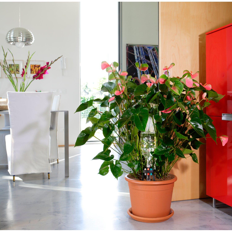 annaffiatoio automatico piante