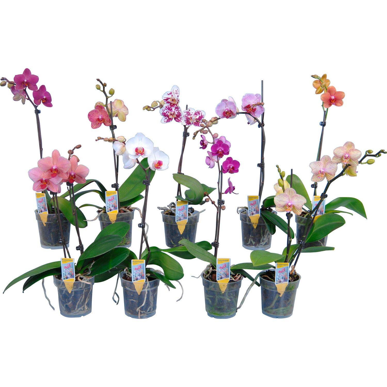 Orchidee vaso 28 images vasi per orchidee orchidee for Vasi per orchidee ikea