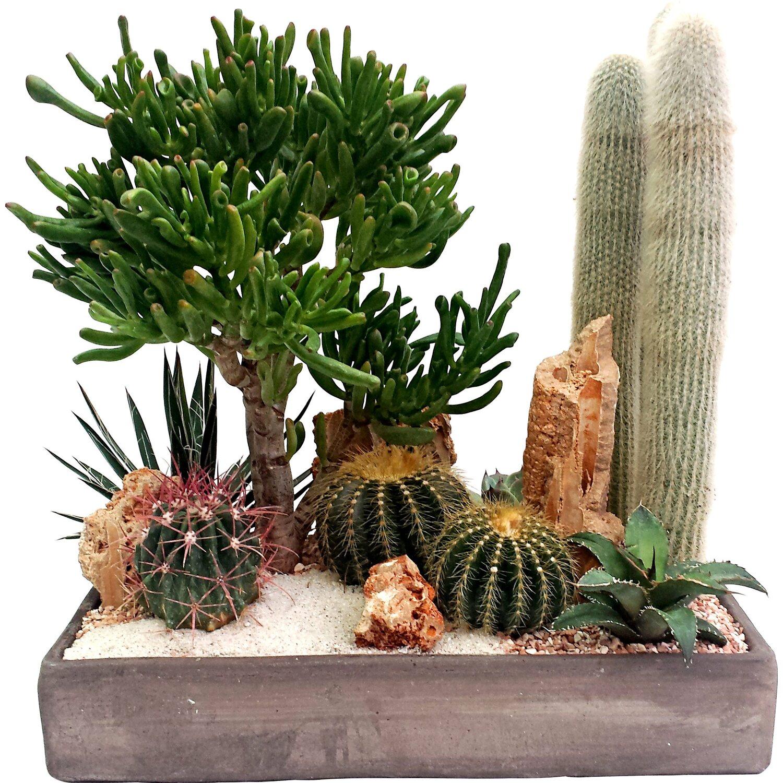 Piante Grasse Piccole Prezzi composizione giardino deserto