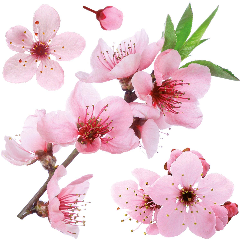 Decorazioni adesive per parete ciliegio in fiore acquista for Decorazioni da parete adesive