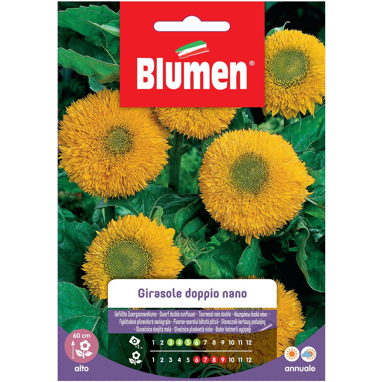 Coltivare Fiori Da Recidere blumen girasole nano giallo