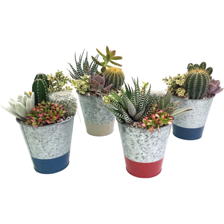 Composizione di cactus e succulente in vaso zincato for Composizione di piante grasse in grande vaso