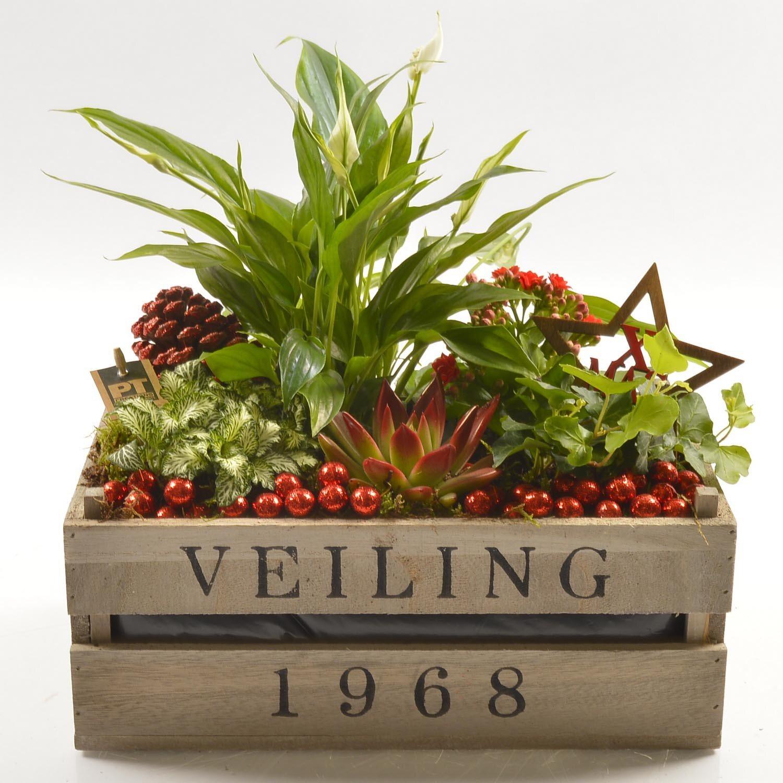 Super Composizione piante assortite rosse in cassetta di legno | OBI RI38