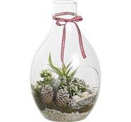 Composizione natalizia 3 piante in bottiglia di vetro con fiori bianchi