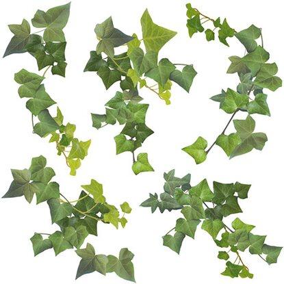 Decorazioni adesive per parete edera acquista da obi for Decorazioni da parete adesive
