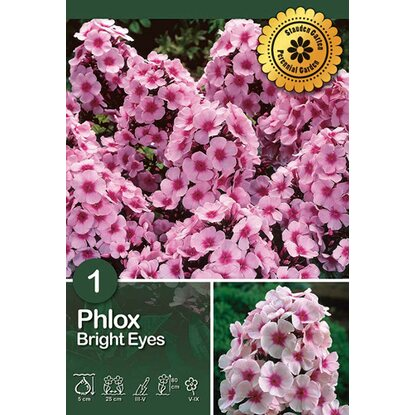 "Phlox ""Bright Eyes"""