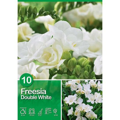 "Fresia ""Double White"""