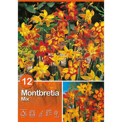 "Montbretia ""Mix"""