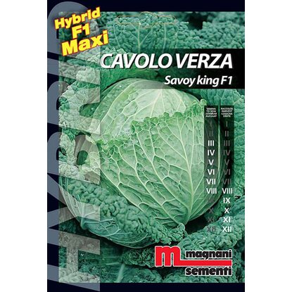 Semi ibridi Cavoloverza Savoy King