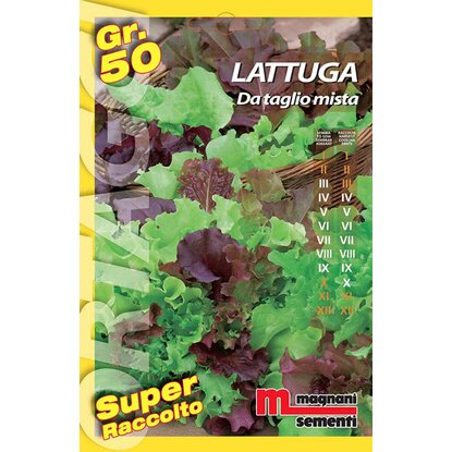 Semi orto big Lattughino taglio mix 50 g