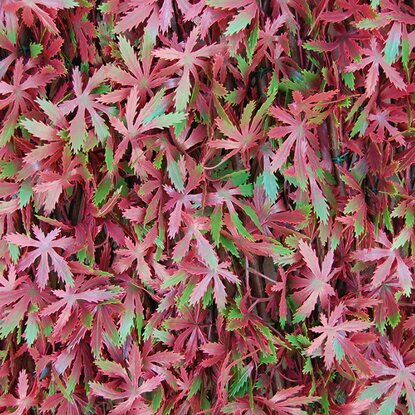 Siepe artificiale con foglie 3D in salice Red Acer 1x2 m, rosso