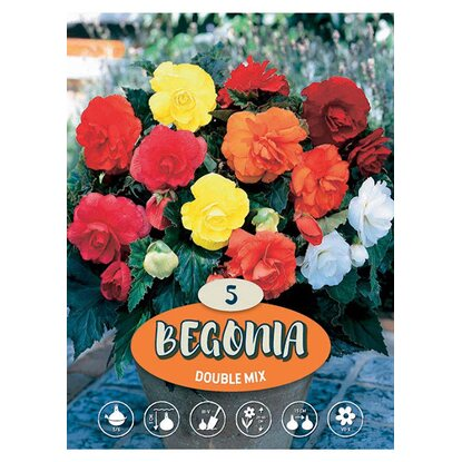 "Begonia ""Double mix"""